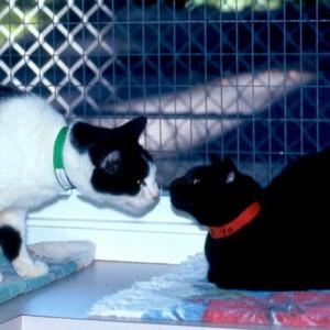 Catssniffnoses