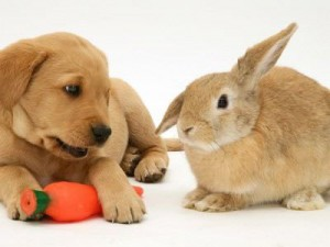pup-guardingtoy-from-rabbit
