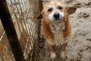 DogAtpuppy-mills-ASPCA