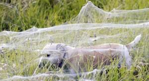 spider-webs-crp