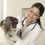Veterinarian Examining Dog